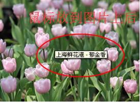 常见seo名词解释二(网站SEO常见术语说明)-从SEO到优化实战大师